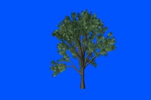 树生长 万物生长 热门特效