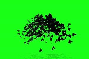 蝙蝠素材 抖音人物变成蝙蝠素材绿屏抠像抠像素