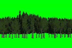 树林 树 绿屏素材 绿幕素材 巧影特效