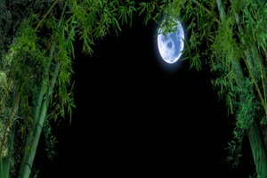 竹林月亮 背景素材 中秋节素材