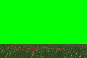 草原 花园 草坪 绿屏素材 绿幕输出 巧影特效