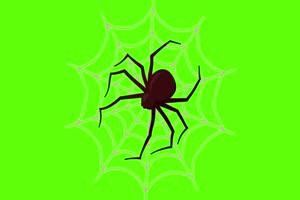 蜘蛛 万圣节 恐怖 鬼魂 绿屏素材特效牛