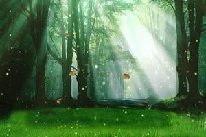 唯美森林 9 巧影 AE 背景素