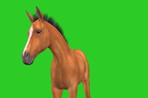 绿幕抠像棕色的骏马绿屏素材 特效抠像