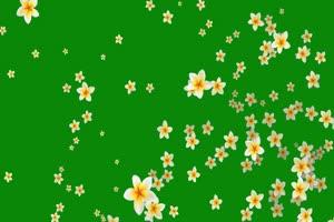 茉莉花 花朵 飘落 绿屏抠像素材