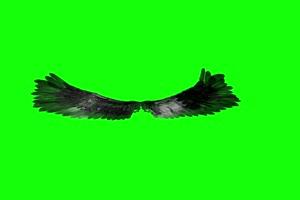 黑天鹅翅膀 抖音热门特效素材 绿屏抠像素材