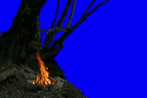 树 篝火 自然绿屏抠像素材