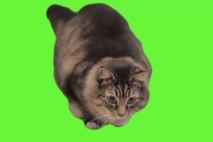 <b>搞笑绿屏 大合集 绿屏抠像素材 巧影AE会声会影</b>
