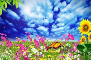 花园 高清背景素材MP4 在线下载