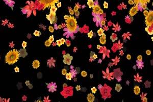 花瓣飘落 免扣像 透明通道